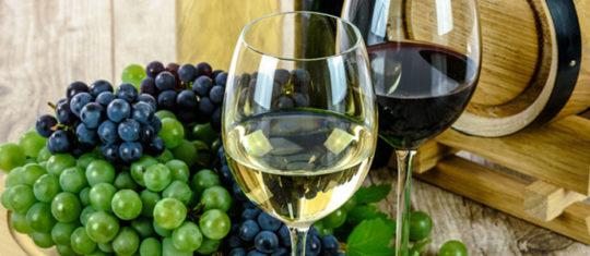 Profitez des vins Buzet bio